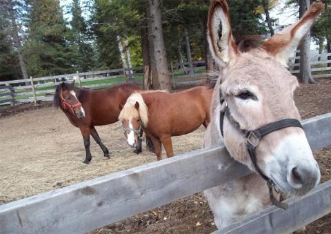 Land O'Lakes animal rescue farm