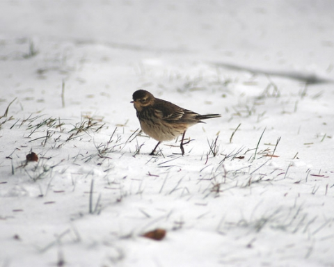 Bird standing on snow