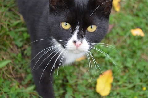 Cat walking on grass