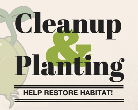Cleanup and planting