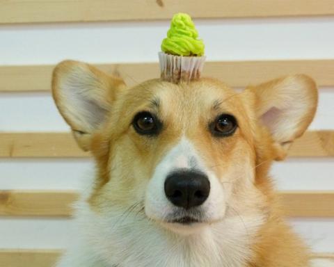 cupcake on a dog