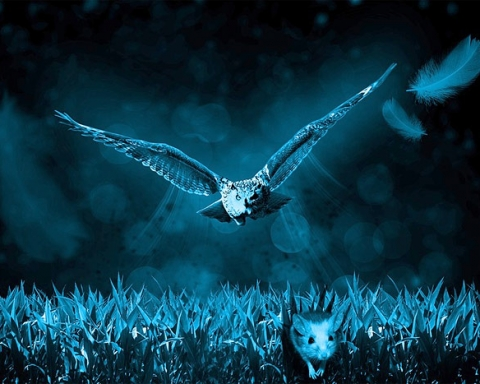 Owl hunting at night