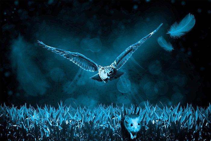 Owl hunting at night