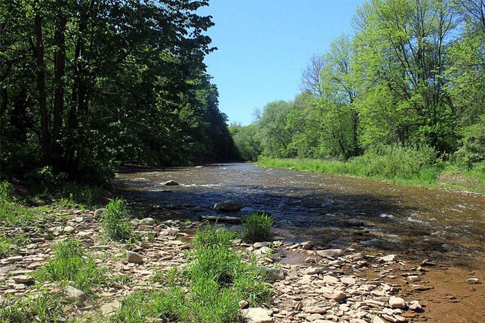 stream shore