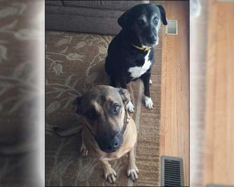 Two dogs stabbed in backyard